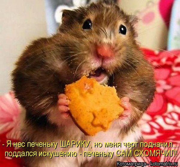 Котоматрица: - Я нес печеньку ШАРИКУ, но меня черт подначил... поддался искушению - печеньку САМ СХОМЯЧИЛ!
