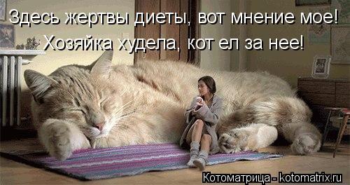 Котоматрица: Здесь жертвы диеты, вот мнение мое! Хозяйка худела, кот ел за нее!
