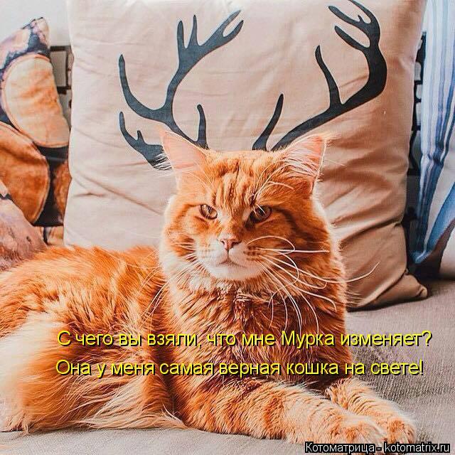 Котоматрица: С чего вы взяли, что мне Мурка изменяет? Она у меня самая верная кошка на свете!