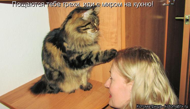 Котоматрица: Пощаются тебе грехи, иди с миром на кухню!
