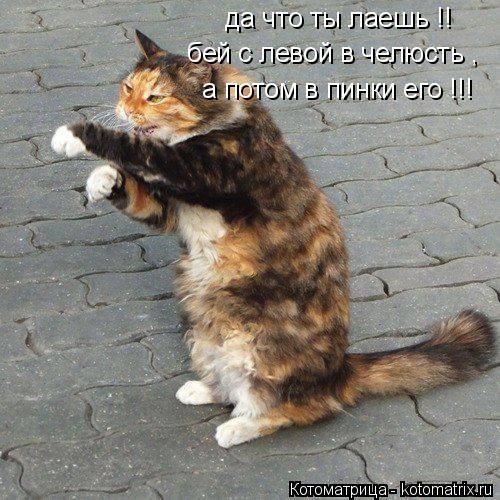 Котоматрица: да что ты лаешь !! бей с левой в челюсть , а потом в пинки его !!!