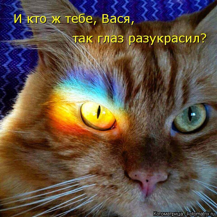 Котоматрица: И кто ж тебе, Вася, так глаз разукрасил?