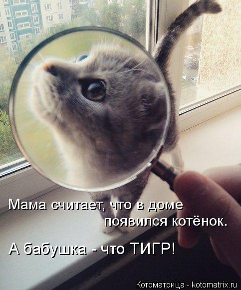 Котоматрица: Мама считает, что в доме появился котёнок. А бабушка - что ТИГР!