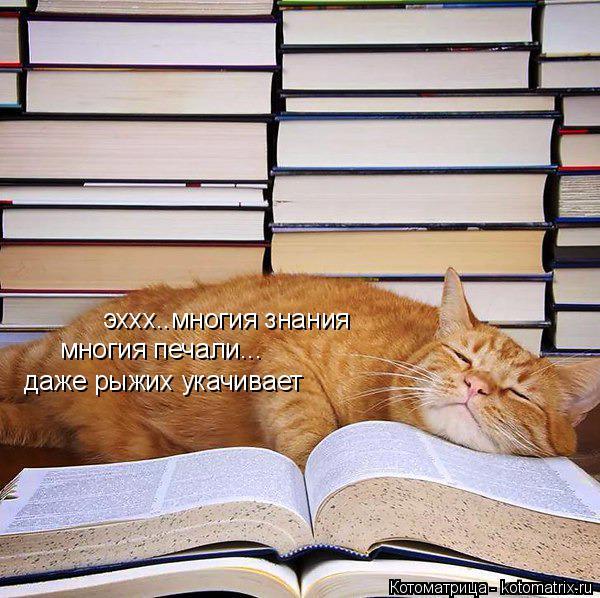 Котоматрица: эххх..многия знания многия печали... даже рыжих укачивает