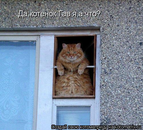 Котоматрица: Да,котенок Гав я,а что?