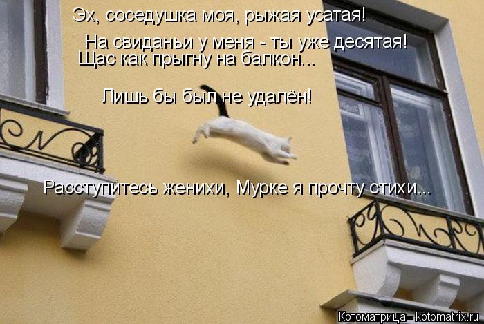 Котоматрица: Эх, соседушка моя, рыжая усатая! На свиданьи у меня - ты уже десятая! Щас как прыгну на балкон... Лишь бы был не удалён! Расступитесь женихи, Мур