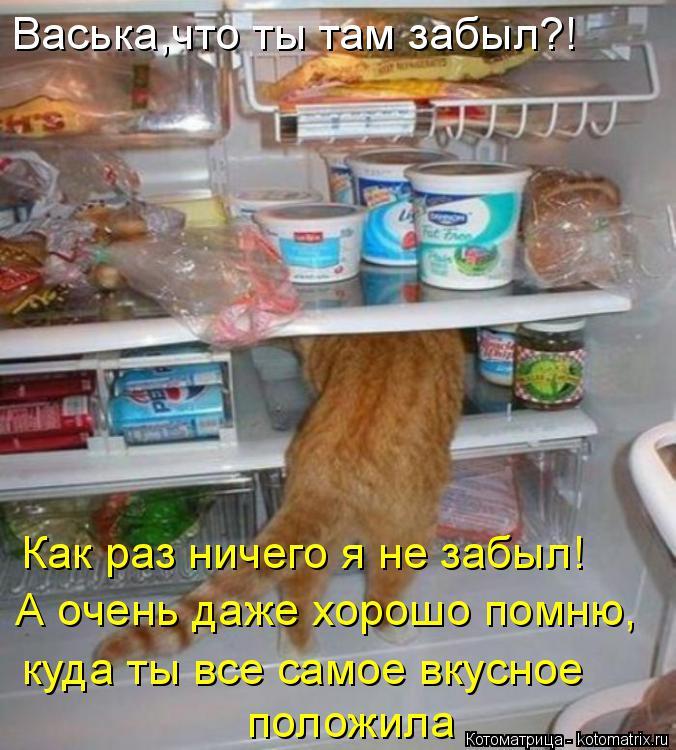 Котоматрица: Васька,что ты там забыл?! Как раз ничего я не забыл!  А очень даже хорошо помню, куда ты все самое вкусное положила