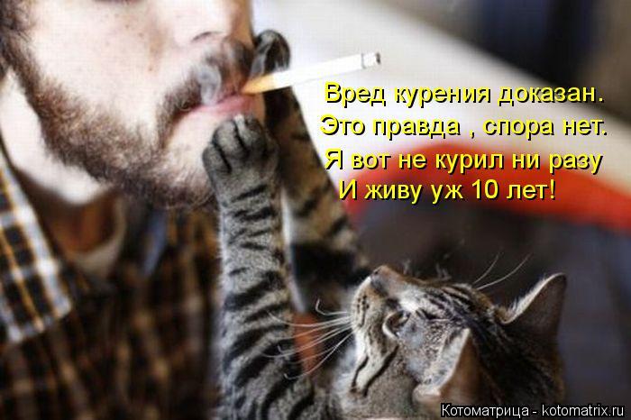 Котоматрица: Вред курения доказан. Это правда , спора нет. Я вот не курил ни разу  И живу уж 10 лет!