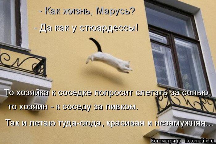 Котоматрица: Так и летаю туда-сюда, красивая и незамужняя... то хозяин - к соседу за пивком. То хозяйка к соседке попросит слетать за солью, - Да как у стюард
