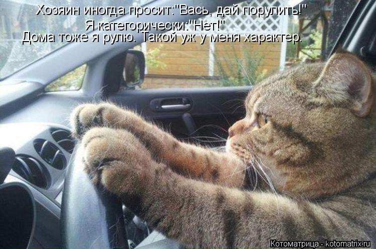 """Котоматрица: Хозяин иногда просит:""""Вась, дай порулить!"""" Я категорически:""""Нет!"""" Дома тоже я рулю. Такой уж у меня характер."""
