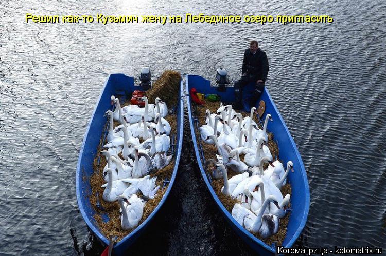 Котоматрица: Решил как-то Кузьмич жену на Лебединое озеро пригласить