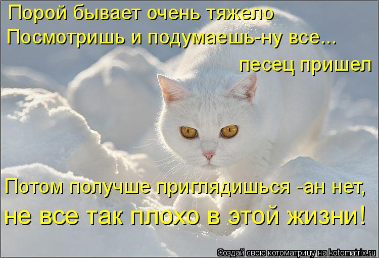 Котоматрица: Порой бывает очень тяжело Посмотришь и подумаешь-ну все... песец пришел Потом получше приглядишься -ан нет, не все так плохо в этой жизни!