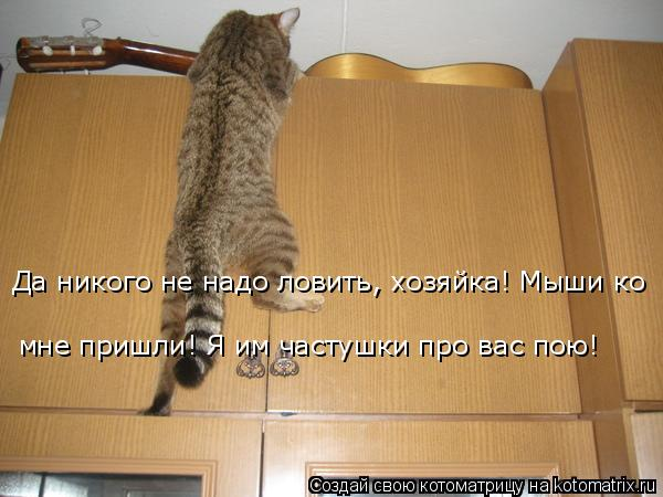 Котоматрица: Да никого не надо ловить, хозяйка! Мыши ко  мне пришли! Я им частушки про вас пою!