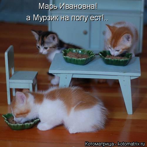 Котоматрица: Марь Ивановна! а Мурзик на полу ест!..