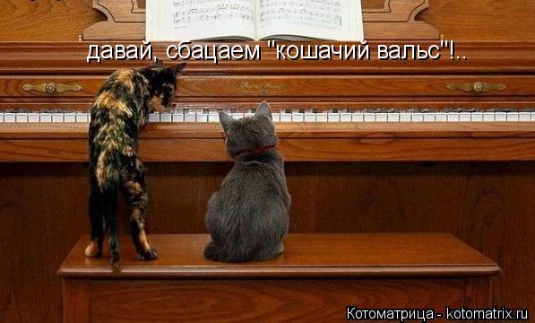 """Котоматрица: давай, сбацаем """"кошачий вальс""""!.."""