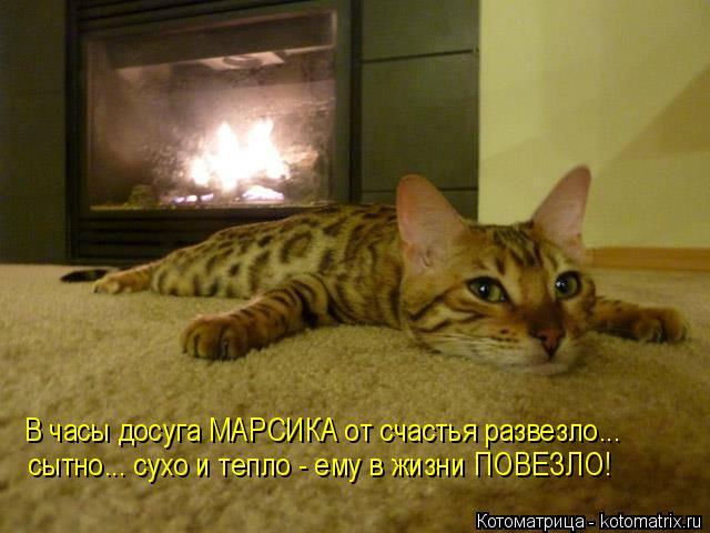 Котоматрица: В часы досуга МАРСИКА от счастья развезло... сытно... сухо и тепло - ему в жизни ПОВЕЗЛО!