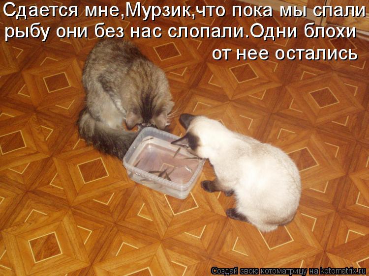 Котоматрица: Сдается мне,Мурзик,что пока мы спали рыбу они без нас слопали.Одни блохи от нее остались