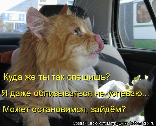Котоматрица: Я даже облизываться не успеваю... Куда же ты так спешишь? Может остановимся, зайдём?