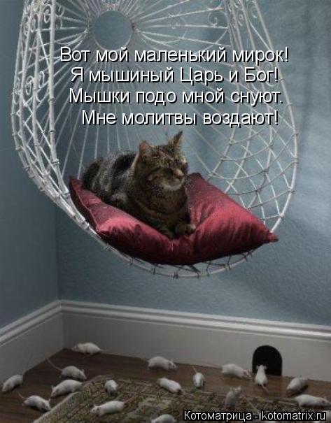 Котоматрица: Мне молитвы воздают! Мышки подо мной снуют. Я мышиный Царь и Бог! Вот мой маленький мирок!