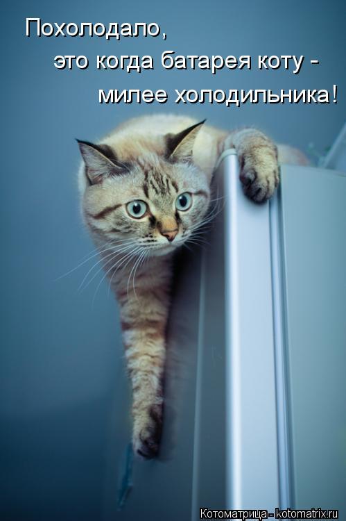 Котоматрица: Похолодало,  это когда батарея коту - милее холодильника!