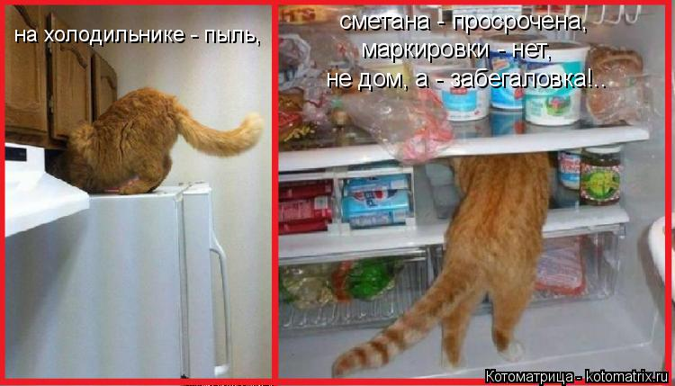 Котоматрица: на холодильнике - пыль, сметана - просрочена, маркировки - нет, не дом, а - забегаловка!..