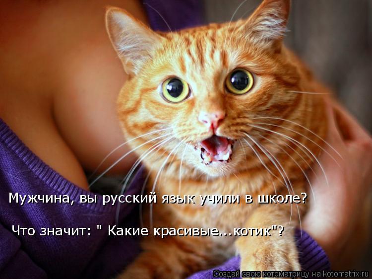 """Котоматрица: Что значит: """" Какие красивые...котик""""? Мужчина, вы русский язык учили в школе?"""