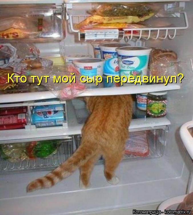 Котоматрица: Кто тут мой сыр передвинул?