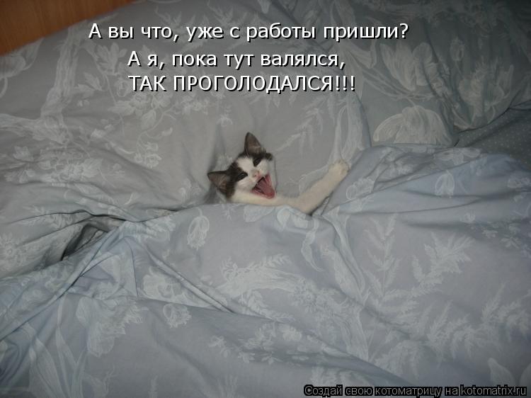 Котоматрица: А вы что, уже с работы пришли? А я, пока тут валялся,  ТАК ПРОГОЛОДАЛСЯ!!!