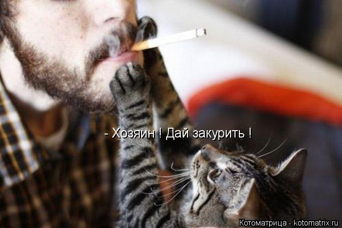 Котоматрица: - Хозяин ! Дай закурить !