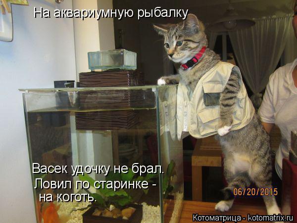Котоматрица: На аквариумную рыбалку Васек удочку не брал. Ловил по старинке - на коготь.