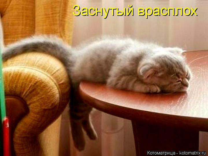Котоматрица: Заснутый врасплох