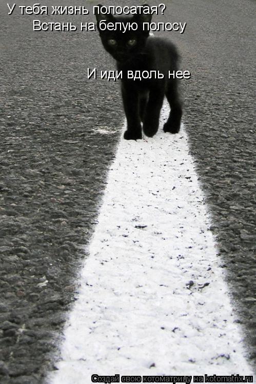 Котоматрица: У тебя жизнь полосатая? Встань на белую полосу  И иди вдоль нее И иди вдоль нее