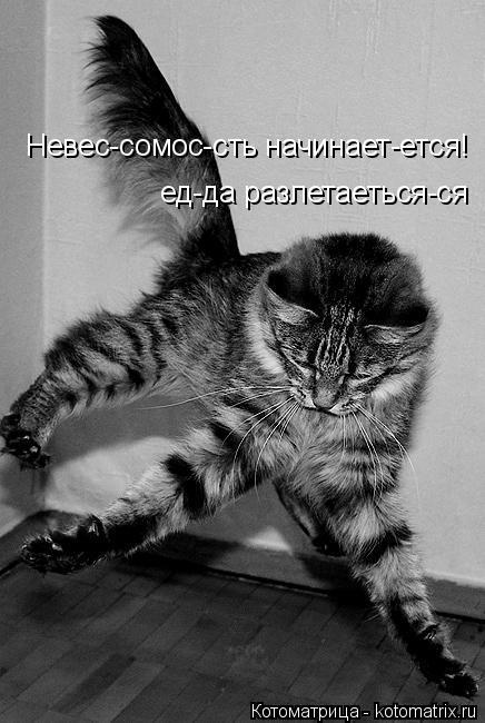 Котоматрица: еда разлетаеться-ся ед-да разлетаеться-ся Невес-сомос-сть начинает-ется!