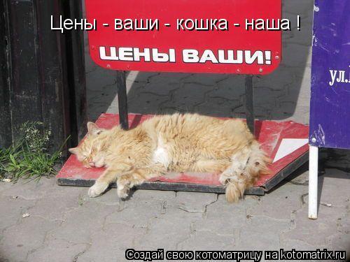 Котоматрица: Цены - ваши - кошка - наша !