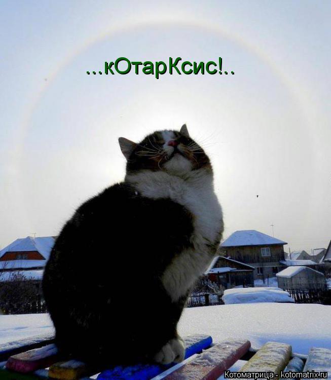 Котоматрица: ...кОтарКсис!..