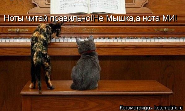 Котоматрица: Ноты читай правильно!Не Мышка,а нота МИ!