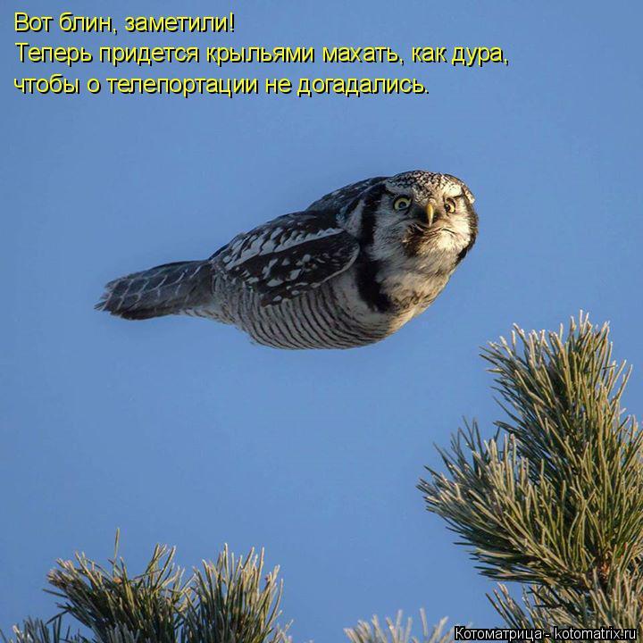 Котоматрица: Вот блин, заметили! Теперь придется крыльями махать, как дура, чтобы о телепортации не догадались.