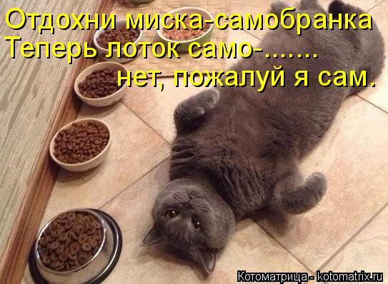 Котоматрица: Отдохни миска-самобранка Теперь лоток само-....... нет, пожалуй я сам.