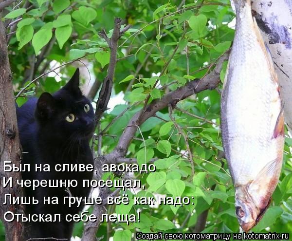 Котоматрица: Был на сливе, авокадо И черешню посещал, Лишь на груше всё как надо: Отыскал себе леща!