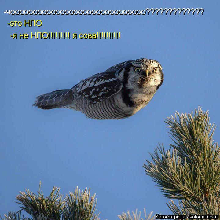 Котоматрица: -чоооооооооооооооооооооооооооооо????????????? -это НЛО -я не НЛО!!!!!!!!! я сова!!!!!!!!!!