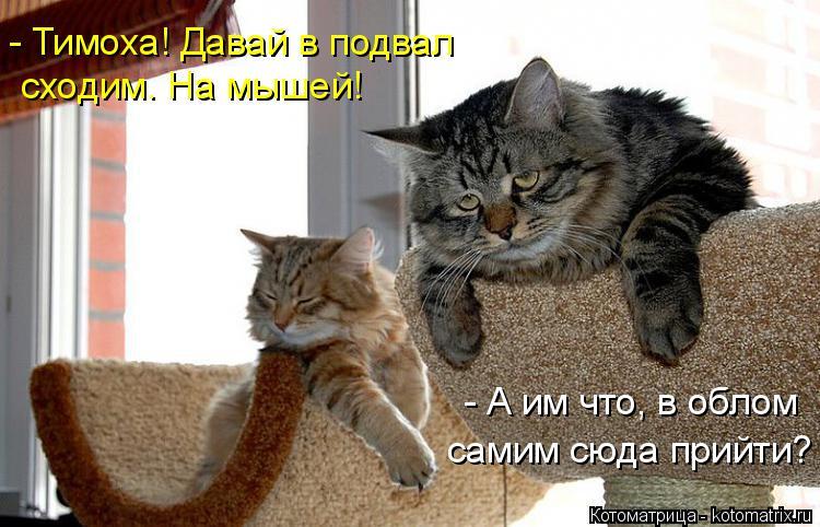 Котоматрица: самим сюда прийти? - А им что, в облом - Тимоха! Давай в подвал сходим. На мышей!