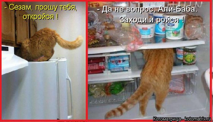 Котоматрица: - Сезам, прошу тебя, откройся ! - Да не вопрос, Али-Баба. Заходи и ройся !