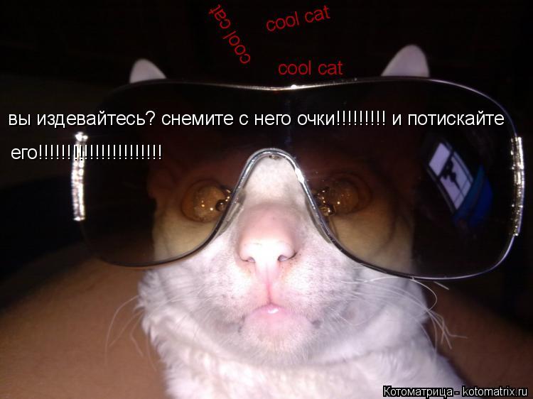 Котоматрица: cool cat cool cat cool cat вы издевайтесь? снемите с него очки!!!!!!!!! и потискайте  его!!!!!!!!!!!!!!!!!!!!!!