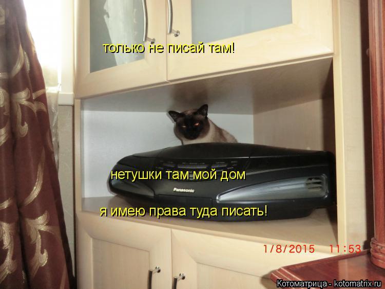 Котоматрица: только не писай там! нетушки там мой дом нетушки там мой дом я имею права туда писать!