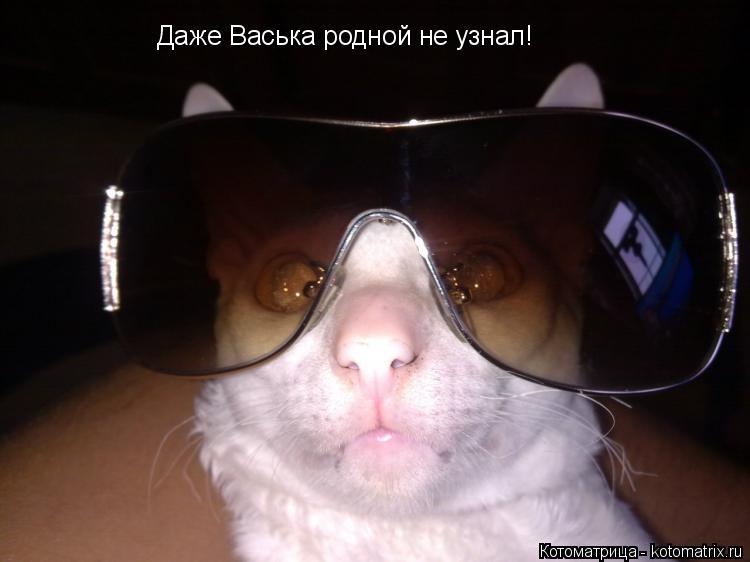 Котоматрица: Даже Васька родной не узнал!