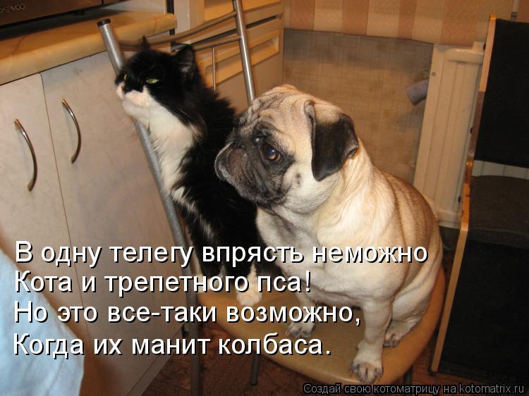 Котоматрица: В одну телегу впрясть неможно Кота и трепетного пса! Но это все-таки возможно, Когда их манит колбаса.