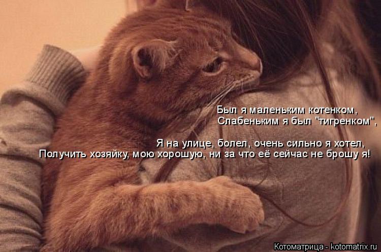 """Котоматрица: Был я маленьким котенком, Слабеньким я был """"тигренком"""", Я на улице, болел, очень сильно я хотел, Получить хозяйку, мою хорошую, ни за что её сей"""