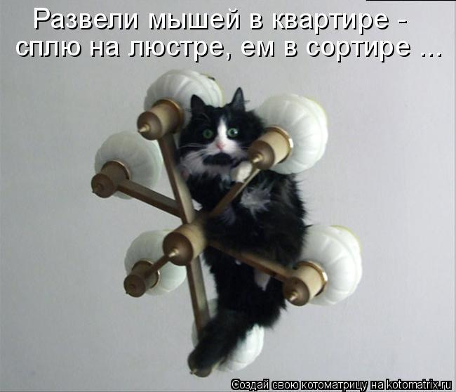Котоматрица: Развели мышей в квартире - сплю на люстре, ем в сортире ...