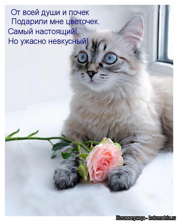 Котоматрица: От всей души и почек Подарили мне цветочек. Самый настоящий! Но ужасно невкусный!