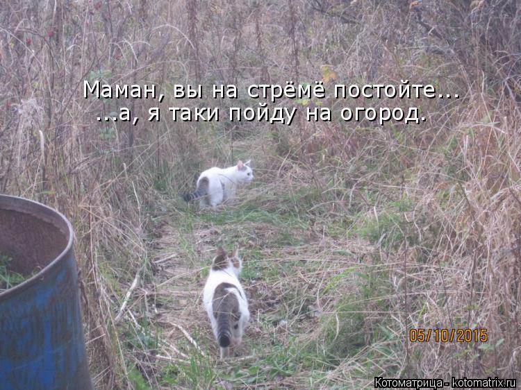 Котоматрица: Маман, вы на стрёмё постойте... ...а, я таки пойду на огород.